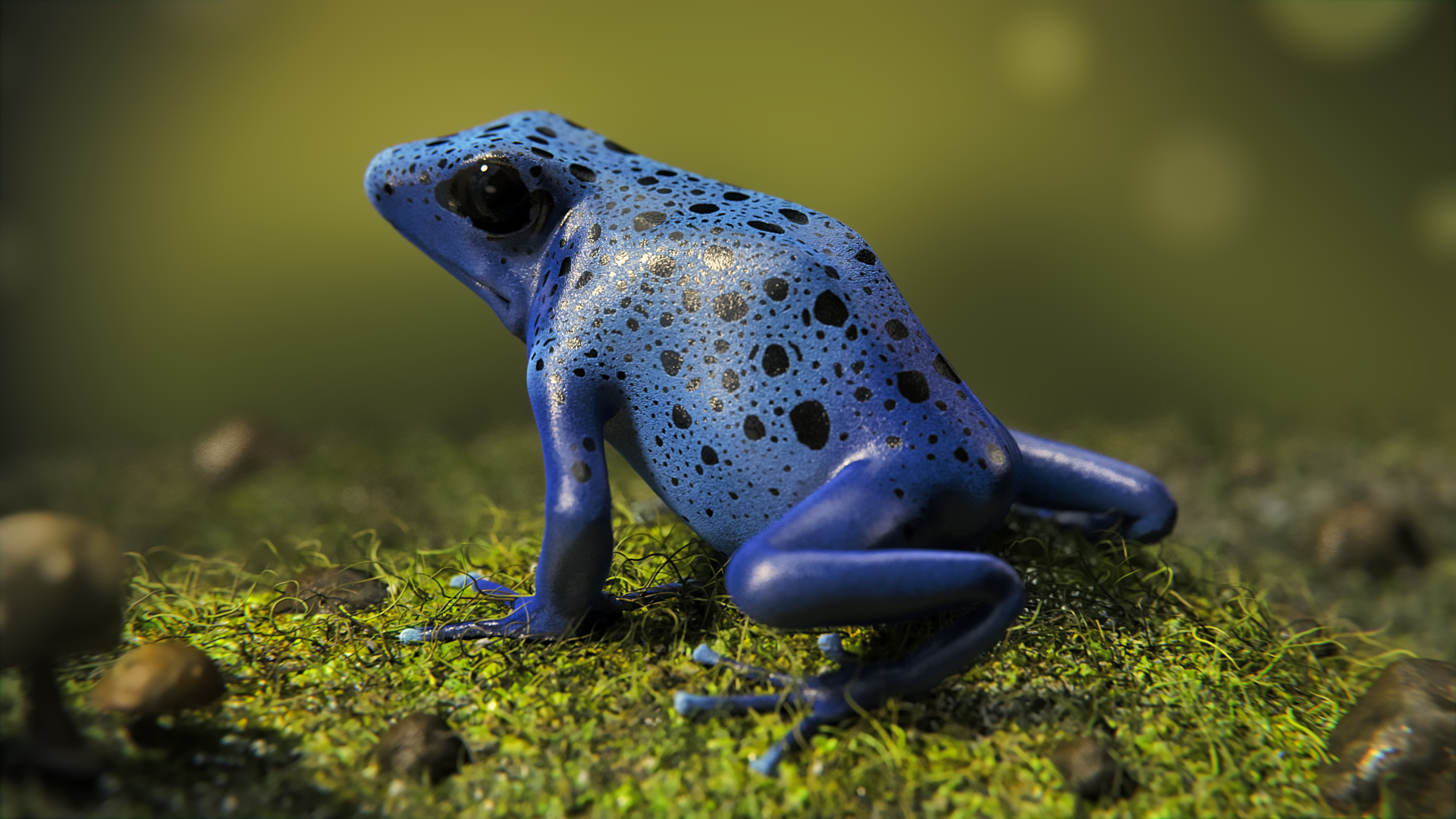 /images/graphisme-3d/animaux/grenouille/01_grenouille-14_05