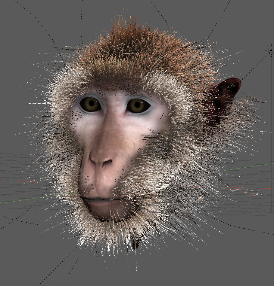 /images/graphisme-3d/animaux/macaque/screenshot_macaque_hair-02