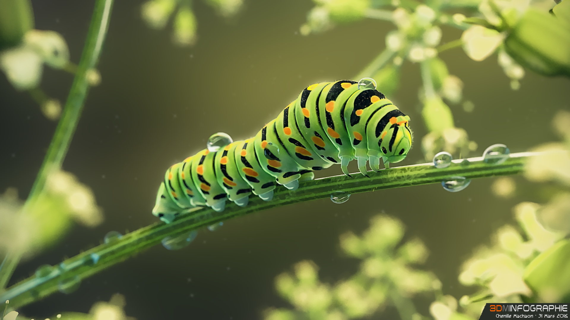 /images/graphisme-3d/insectes/chenille_machaon/caterpillar-09-01